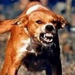 бешенная собака